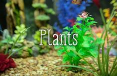 Fake plants can lend your tank a splash of colors. If you are using live plants, make sure that they are a species that can be fully submerged in water. Saltwater Tank, Saltwater Aquarium, Planted Aquarium, Aquarium Fish, Fake Fish Tank, Fish Tanks, Reptile Enclosure, Reptile Cage, Goldfish Tank