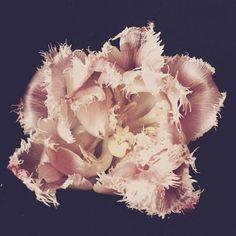 ashely woodson baily ruffle tulip art fair fridays christine dovey heirloom and knot