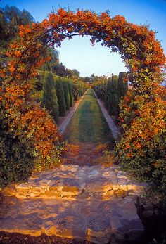 Pyrocanthus arch, Athens, Greece