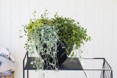 Sommergrønne planter trives godt også i skyggen. Garden Inspiration, Planters, Planter Boxes, Plant, Flower Pots, Pots