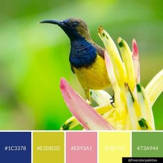Bird Lovers | Spring | Color Palette Inspiration  Great for digital art and brand colors.