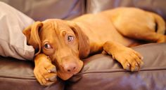 Here are six ways to help your pup when they will be home alone