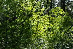제주 장생의 숲 2