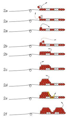 Starting a brick stitch (courtesy of Rings & Things)