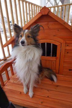 Sheltie in her Dog Condo