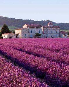 Sénanque, Vaucluse, France