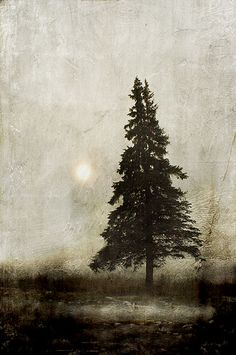 winter light... by jamie heiden, via Flickr