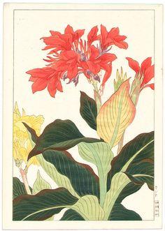 Artist: Nishimura Hodo  Title: Canna  Date: Ca. 1930s.