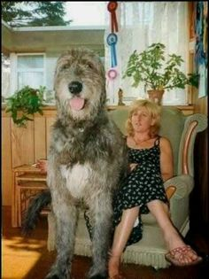 This Irish wolfhound.not sure why I'm obsessed w these huge dogs but I am Huge Dogs, Giant Dogs, Beautiful Dogs, Animals Beautiful, Worlds Biggest Dog, World's Biggest, Pet Dogs, Dogs And Puppies, Doggies
