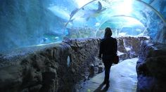 Underwater tunel in Sealife, Benalmadena