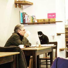 Katzencafé Aachen