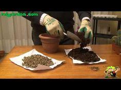 Soil mix for succulents|John Dromgoole|Central Texas Gardener - YouTube