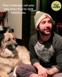 Really Funny Memes, Haha Funny, Funny Dogs, Animal Jokes, Funny Animal Videos, Pet Dogs, Dog Cat, Doggies, Funy Animals