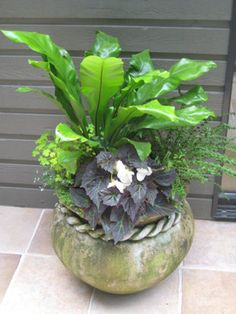 Shade-loving combination of fern and begonia for a dinning patio