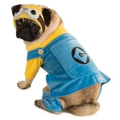 Official Pet Dog Cat Minion Despicable Me Halloween Fancy Dress Costume Outfit XS-XL (Large)