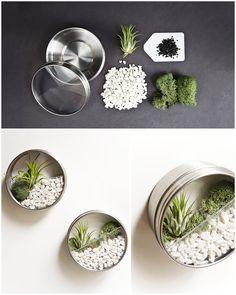 Use latas para plantar uma suculenta e enfeitar a casa! #sustentabilidade #DIY #mundomelhor #reciclar