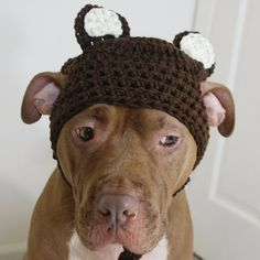 Brown Bear Hat, Dog Park Publishing. I call Tyson a bear anyway!