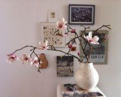 Magnoliia