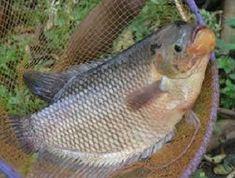 7 Ide Kolam Terpal Terpal Kolam Kolam Ikan