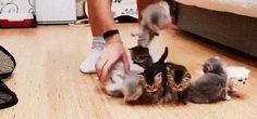 Adjusting Kittens