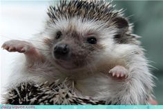 Aww Hedgehog Zombie :]