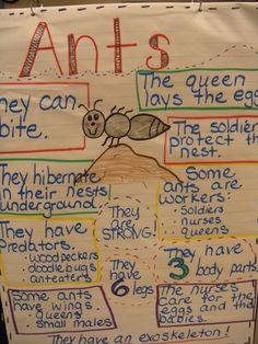 Peace, Love and Kindergarten: Bugs, Bugs, BUGS!!
