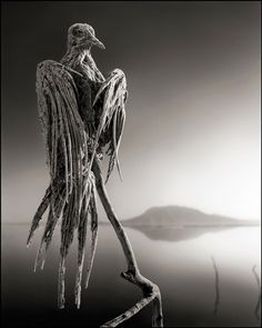 Lake in Tanzania makes animals into statues #awesomesauce Nick Brandt photo of animal calcified by Lake Natron