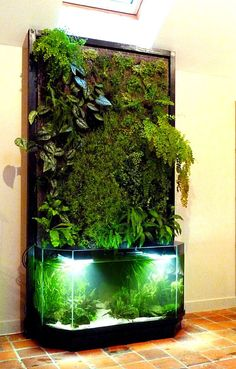 NATURE DESIGN vous propose la création d'un écosystème complet(…)un mur… NATURE DESIGN offers you the creation of a complete ecosystem (…) a plant wall and an aquarium this ecosystem works on the principle of aquaponics . Aquarium Design, Aquarium Ideas, Indoor Water Garden, Indoor Plants, Planted Aquarium, Aquarium Garden, Aquarium Aquascape, Aquarium Fish Tank, Aquascaping