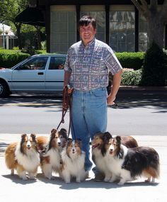 Peter & The Shelties In Solvang
