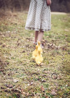 Ducklings, imprinted on farm girl. :}  The Murmuring Cottage