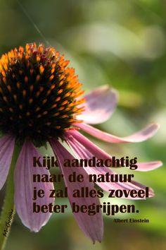kijk aandachtig naar de natuur