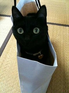 """black cat- """" I want to go on vacation"""""""