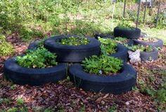 10 métodos de cultivo inusuales que funcionan