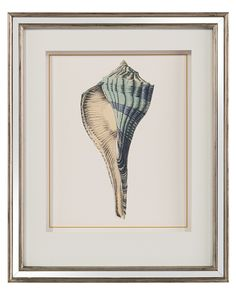 Shell Study II - Wall Decor - Mirrors & Wall Decor - Our Products