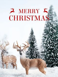 Merry Christmas Quotes :Merry Christmas Messages 2016 for Friends, Cards, Wishes to Family - Quotes Daily Merry Christmas Quotes Jesus, Christmas Messages For Friends, Merry Christmas Message, Merry Christmas Pictures, Merry Christmas Images, Christmas Poems, Christmas Photo Cards, Christmas Greetings, Xmas Pictures