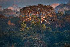 Araquém Alcântara | The Amazon Forest II, Brazil (2005) | Available for Sale | Artsy