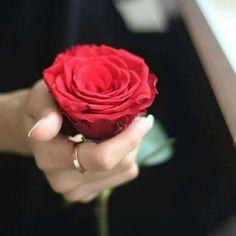 I ❤ photos Romantic Roses, Beautiful Roses, Beautiful Hands, Rad Rose, Love Rose, Cute Profile Pictures, Profile Picture For Girls, Hand Photography, Girl Photography Poses