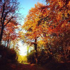 Best autumn walk ever