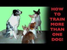 How to train more than one dog- clicker dog training - YouTube~Watched and applied this video~Devota
