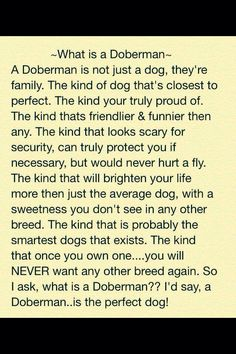 """""""What is a Doberman"""" Written by Maureen Pelczarski. John says all the time that he will only ever have a Doberman for the rest of his life. I Love Dogs, Puppy Love, Cute Dogs, Big Dogs, Chien Dobermann, Black And Tan Terrier, Sources Of Stress, Doberman Love, Doberman Pinscher Dog"""