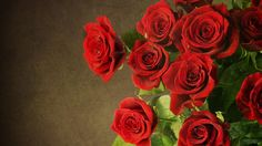 Red Roses Hd Wallpapers