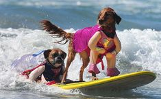 Dogs Surfing :-)