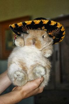 "This bunny, who is clearly being submitted to the ""birthday sombrero."""