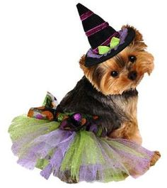 Give your pup a wickedly sweet costume by dressing her in this glittering tutu.($6.99, partycity.com... - Courtesy of Party City