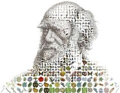 Charles Darwin for Time Magazine