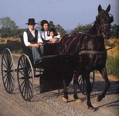 Image result for pics of amish carriage
