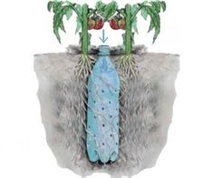 Well here's a good idea for watering plants. Underground Self Watering Recycled Bottle System - Potted Vegetable Garden Lif. Herb Garden, Lawn And Garden, Garden Plants, Potted Plants, Garden Water, Diy Garden, Pvc Pipe Garden Ideas, House Plants, Potted Flowers