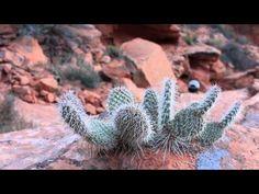 Tribute to Saint George Utah - YouTube Best Western Coral Hills, Saint George Utah