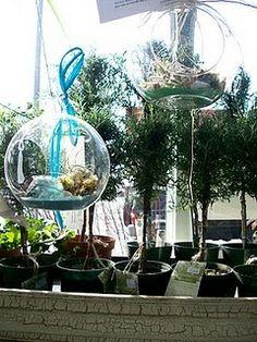 Seed Garden Shop in East Village, Des Moines: The cutest little shop with maidenhair fern, mimosa, pitcher plants, jasmine, pepperomia, heirloom seeds and gardening supplies. #Gardening #Seed_Shop #Des_Moines #Iowa