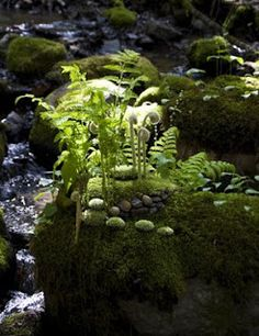 Fiddleheads Fern Faerie Garden.  I  love the natural look of this.